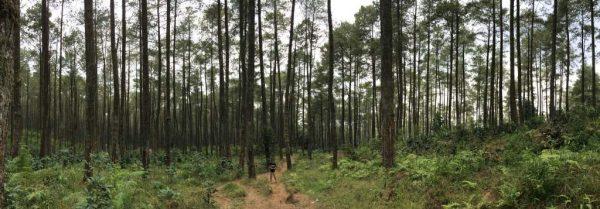tempat wisata di lembang - Taman Jayagiri Lembang