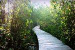 tempat wisata Hutan Mangrove Gunung Anyar di Surabaya